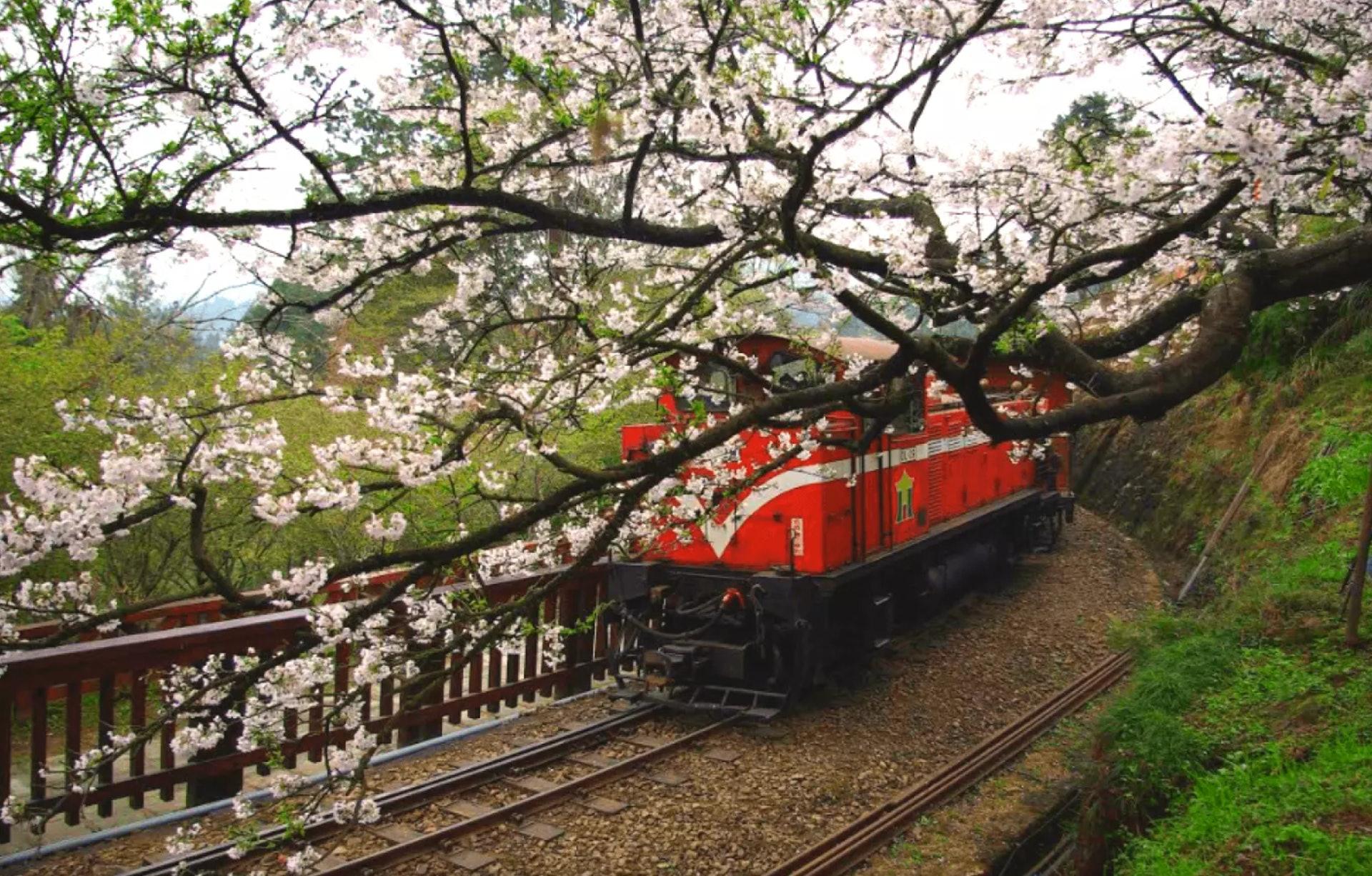 阿里山小火車(KKday截圖)
